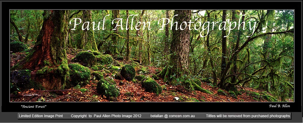 Barrington Tops photography