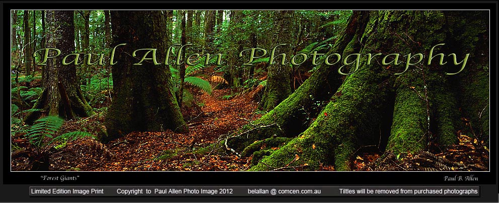 Hunter Valley Photography Barrington Tops